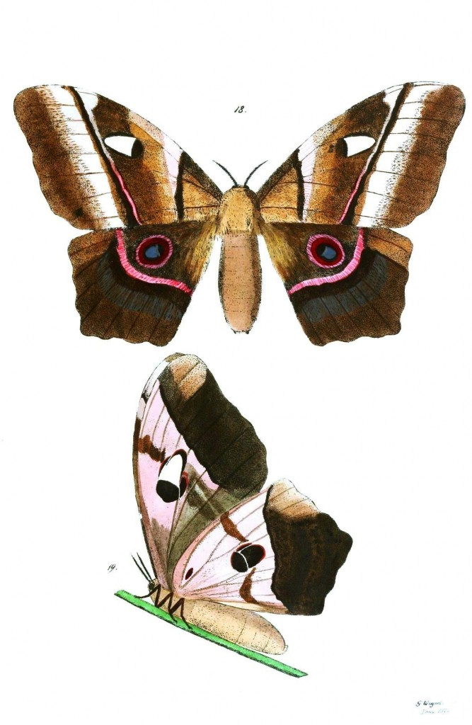 Animal - Insect - Butterflies - Moth 14
