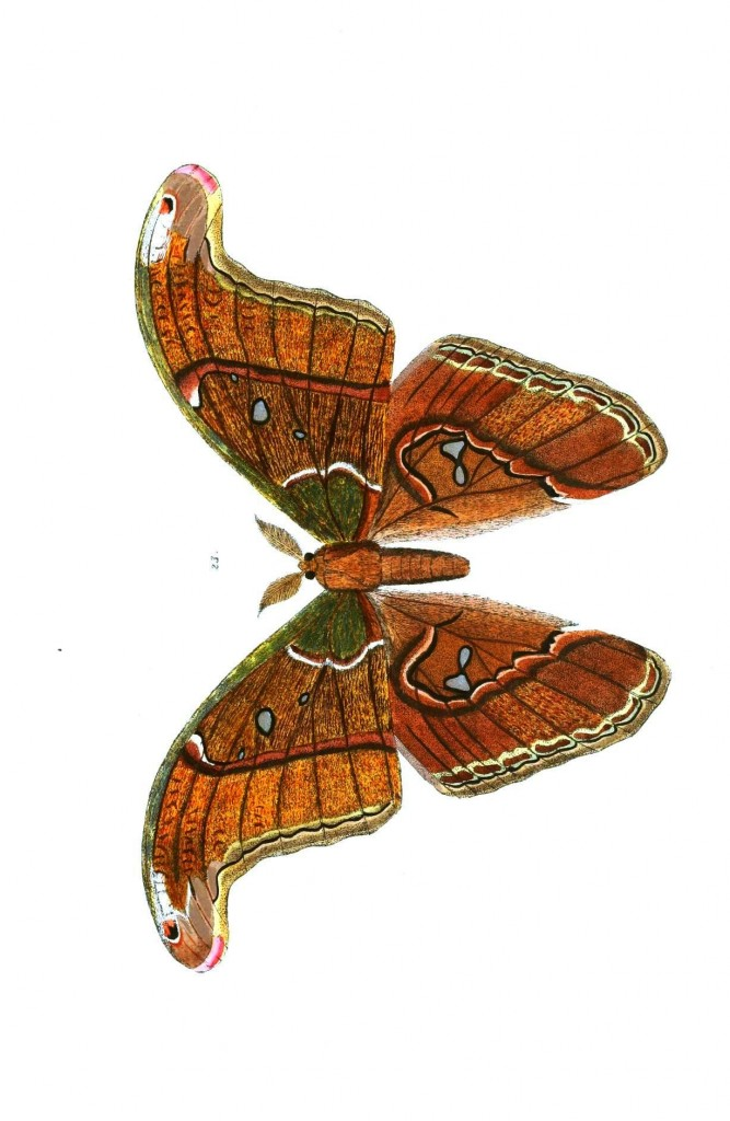 Animal - Insect - Butterflies - Moth 17