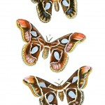 Animal - Insect - Butterflies - Moth 20