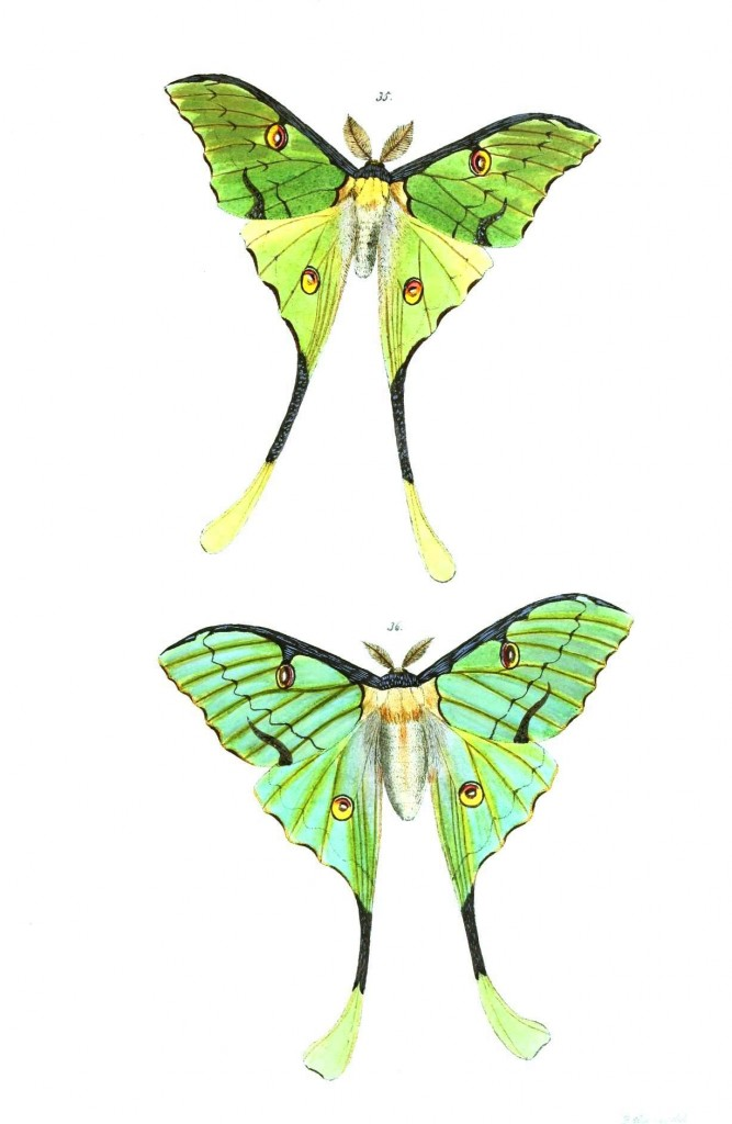 Animal - Insect - Butterflies - Moth 23