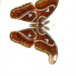 Animal - Insect - Butterflies - Moth 26