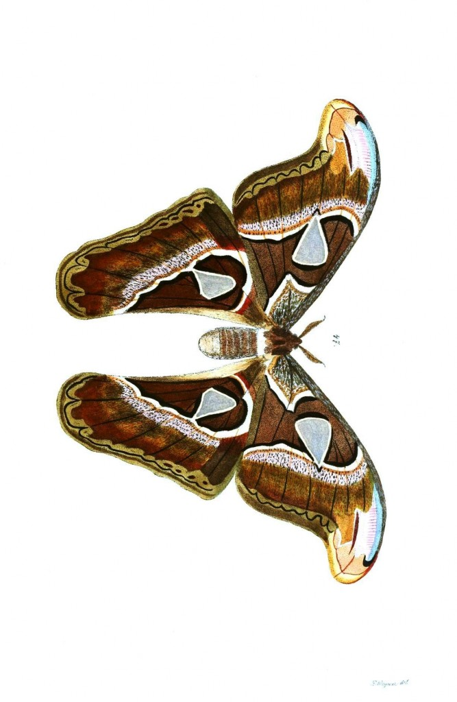 Animal - Insect - Butterflies - Moth 27