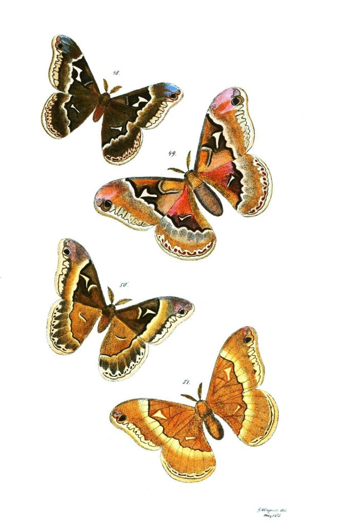 Animal - Insect - Butterflies - Moth 28