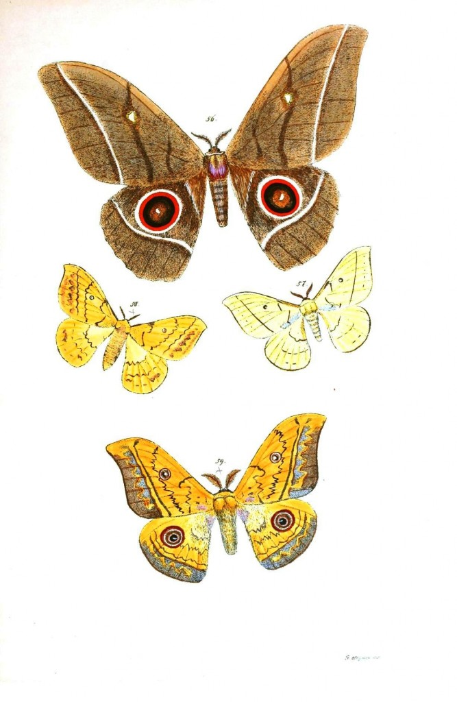 Animal - Insect - Butterflies - Moth 30