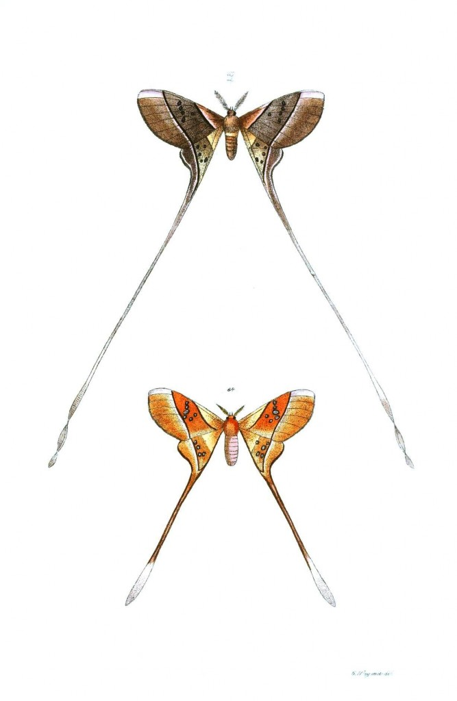 Animal - Insect - Butterflies - Moth 31
