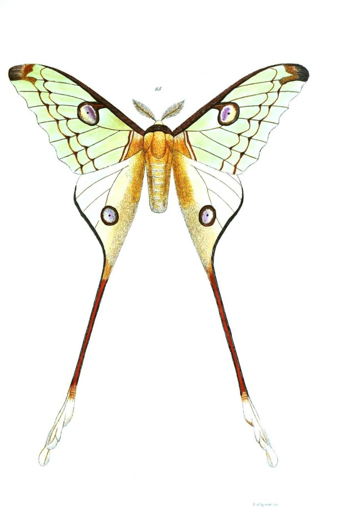 Animal - Insect - Butterflies - Moth 32