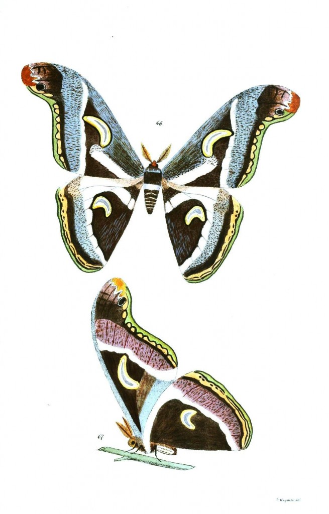 Animal - Insect - Butterflies - Moth 34