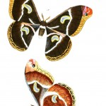 Animal - Insect - Butterflies - Moth 35