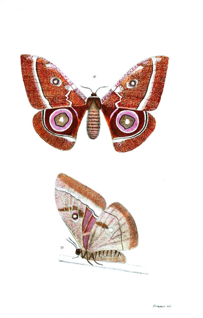 Animal - Insect - Butterflies - Moth 36