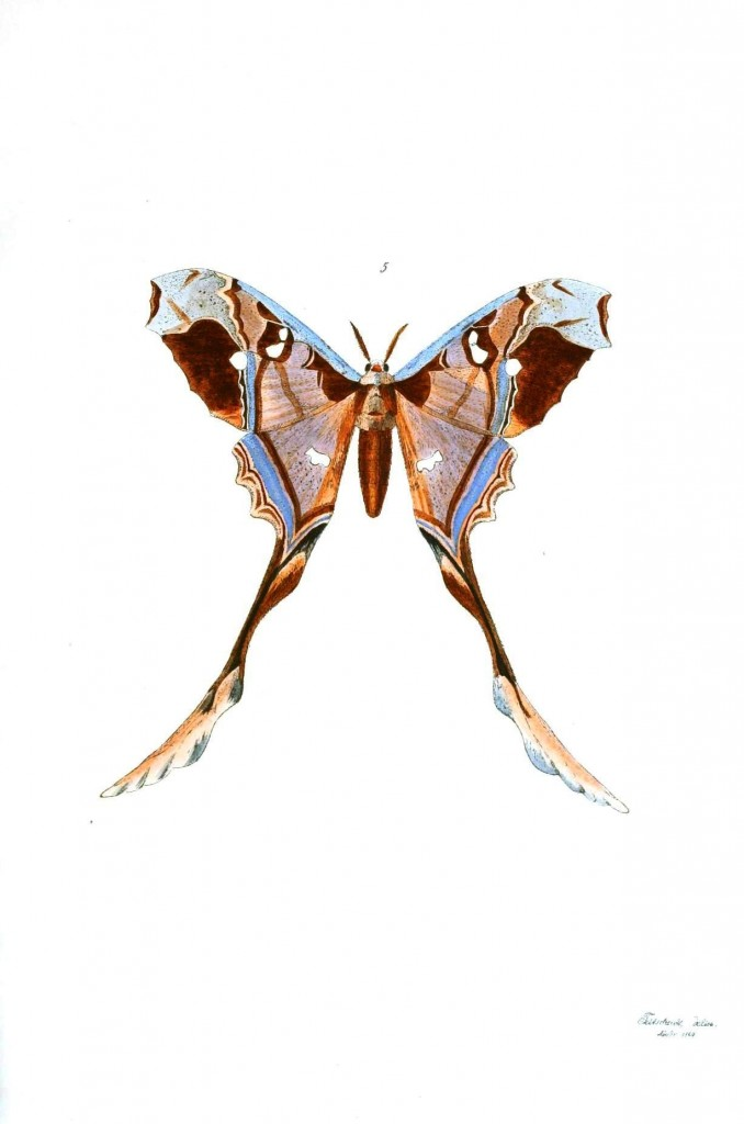 Animal - Insect - Butterflies - Moth 5