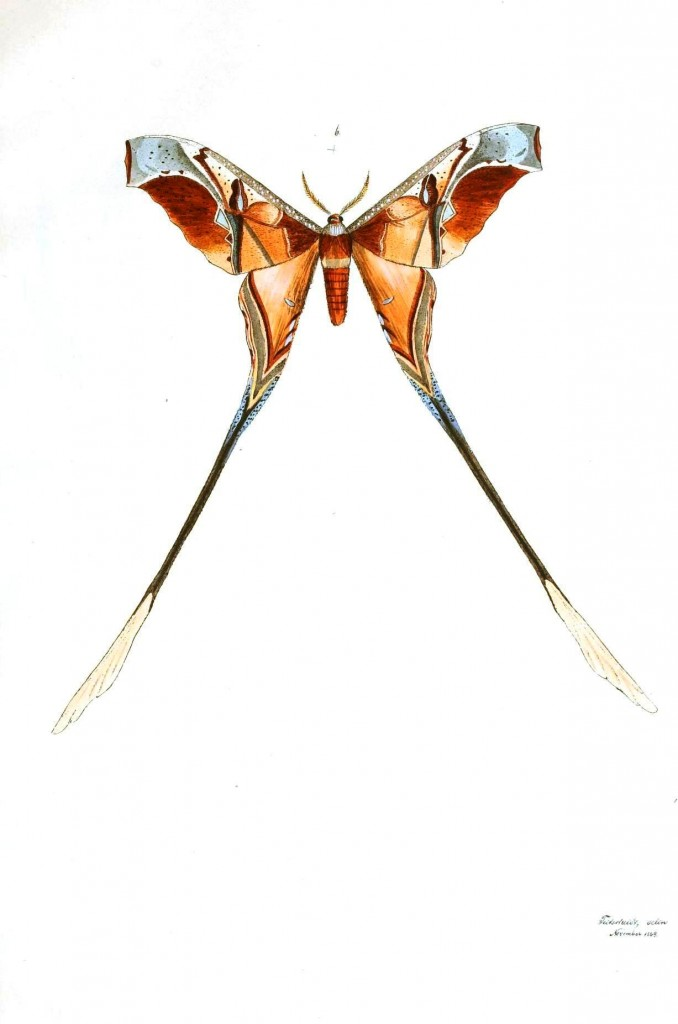 Animal - Insect - Butterflies - Moth 6
