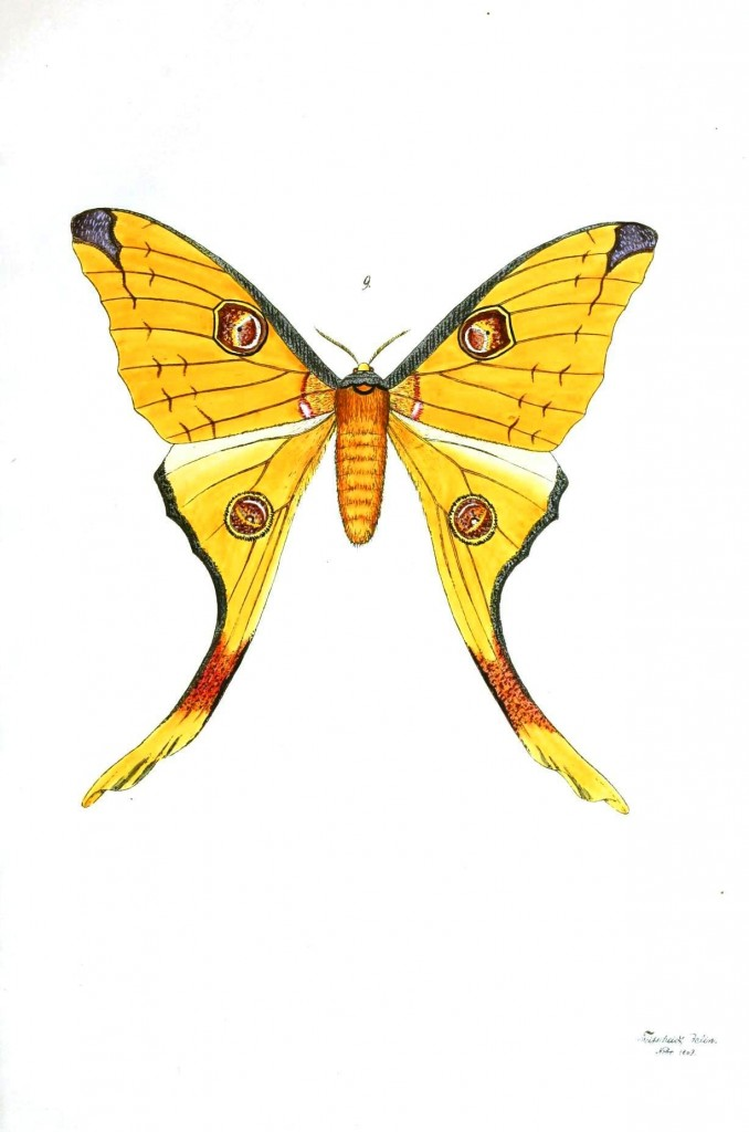 Animal - Insect - Butterflies - Moth 7