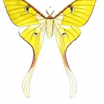 Animal - Insect - Butterflies - Moth 8