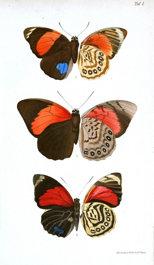 Animal - Insect - Butterflies - Red 2