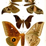 Animal - Insect - Butterflies - Rust colored 2