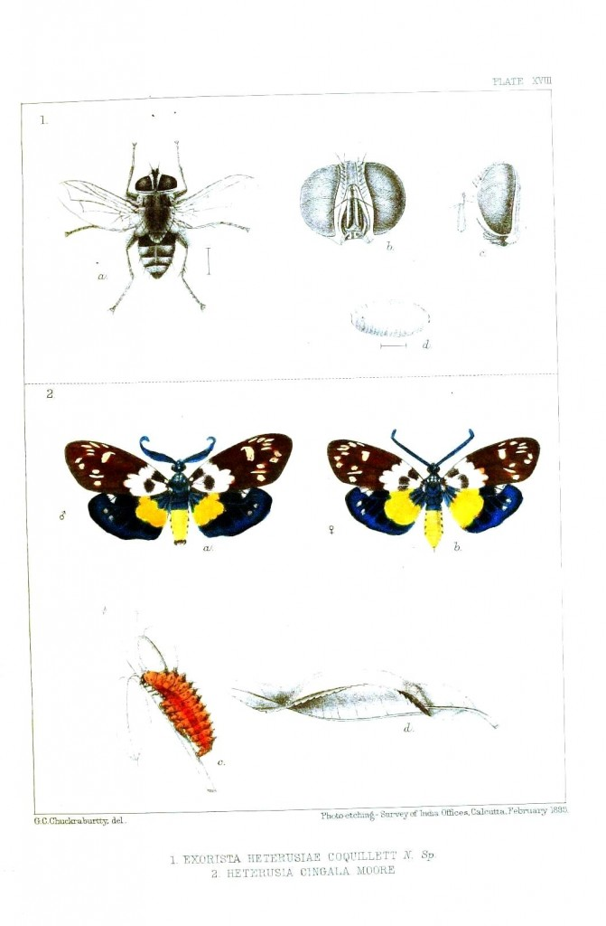 Animal - Insect - Butterfly - Butterflies and bees