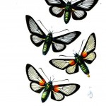 Animal - Insect - Butterfly - Lepidopterologicae - (2)