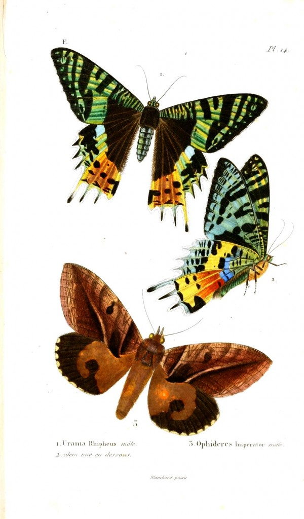Animal - Insect - Butterfly, Madagascar