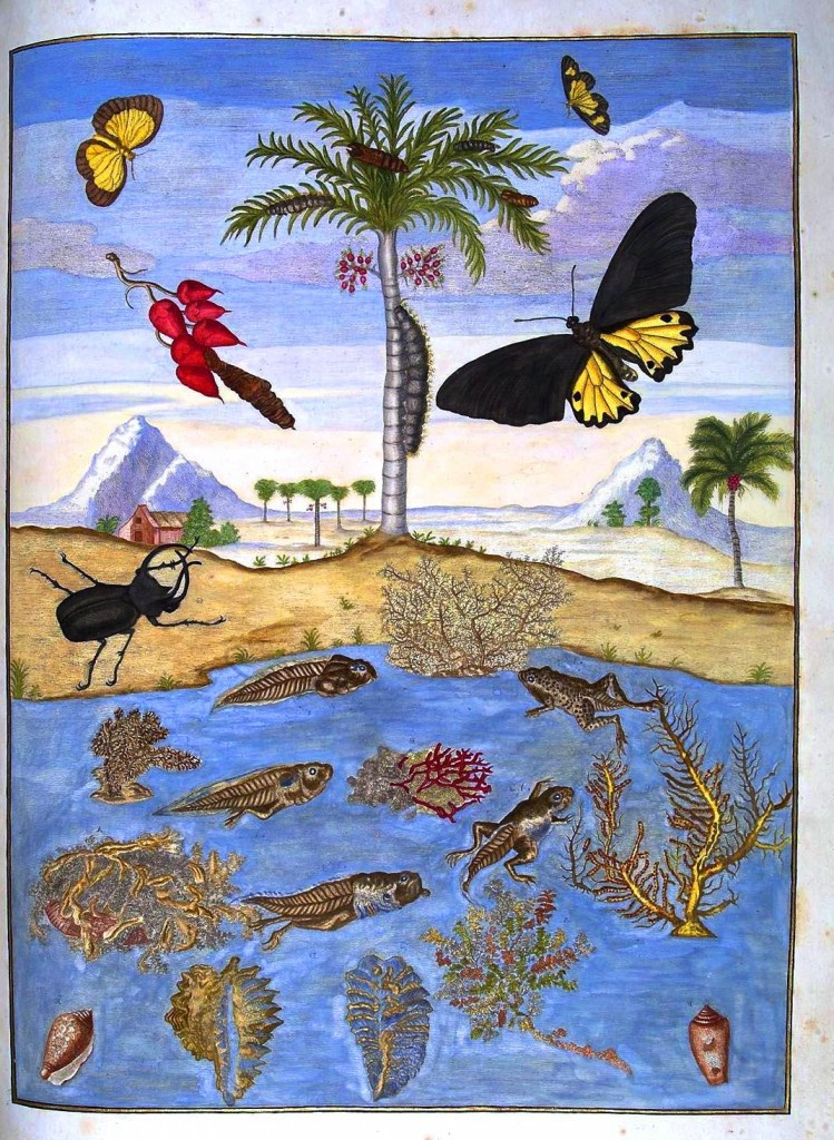 Animal - Insect - Butterfly, frog, coral Surinam