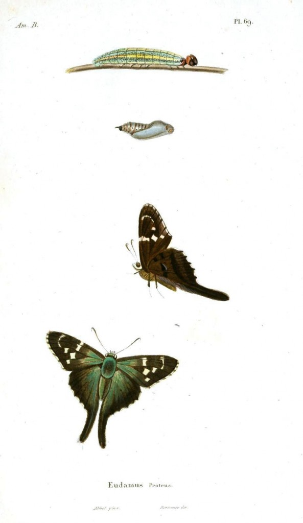 Animal - Insect - Butterfly, metamorphoses