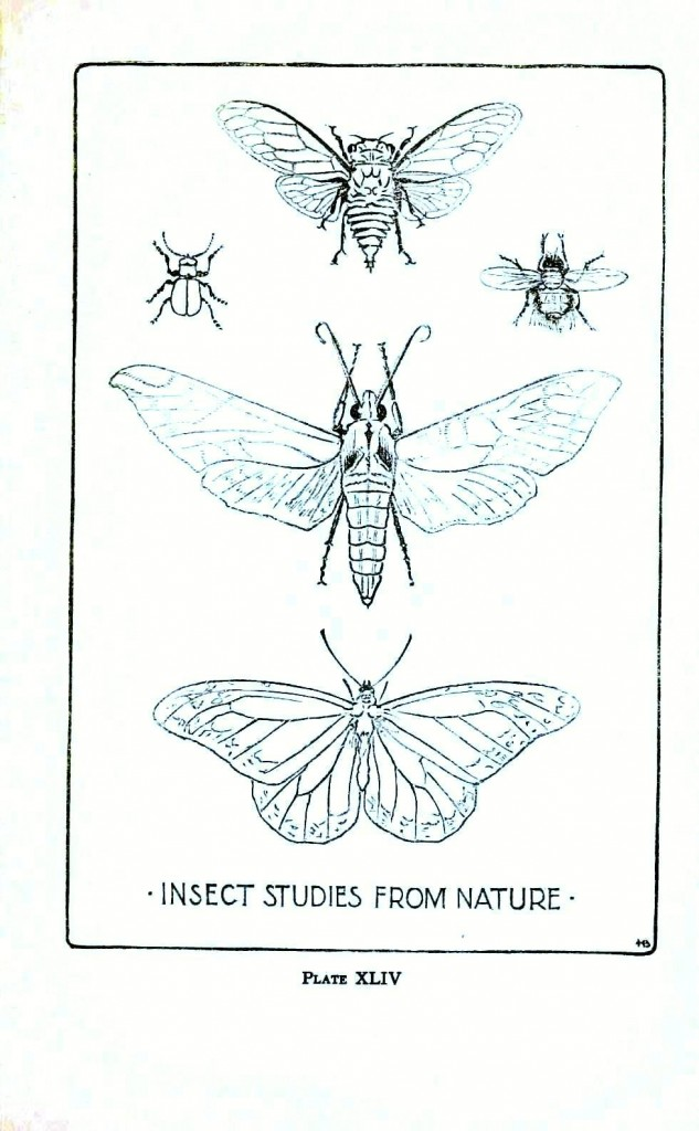 Animal - Insect - Insect line drawings