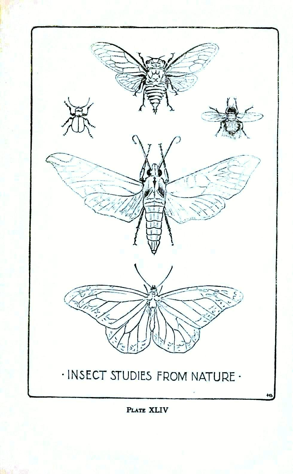 Line Drawing Insects : Animal insect line drawings vintage printable