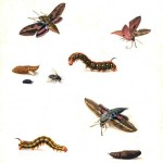 Animal - Insect - Metamorphosis