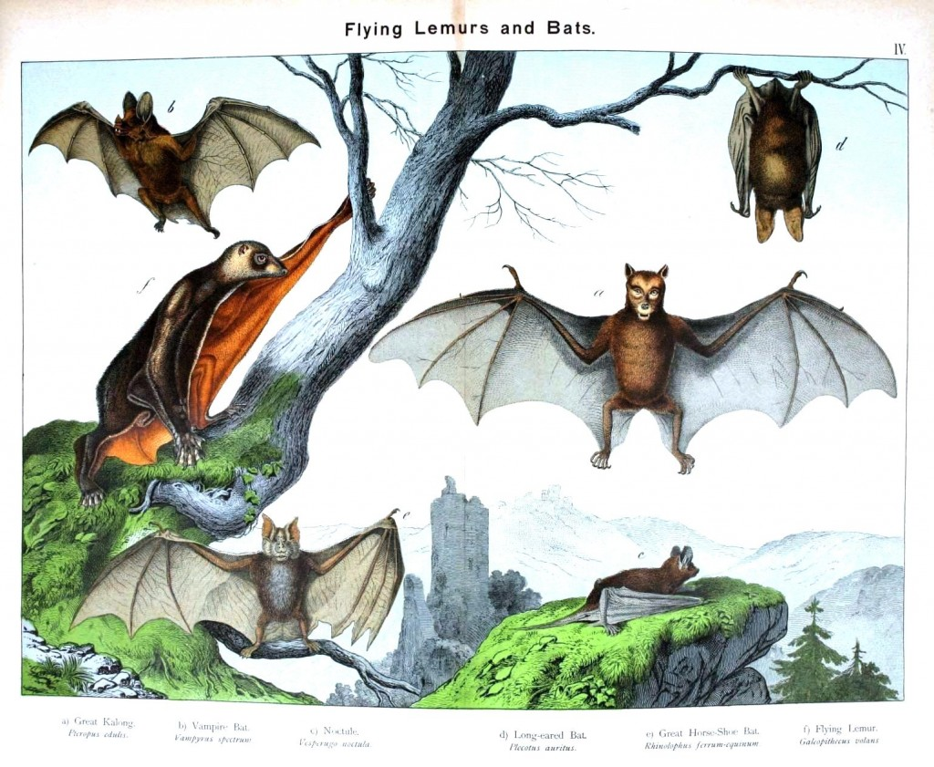 Animal - Non-human primate - Flying lemurs and bats