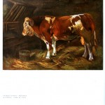 Animal - Range and Farm - Cow - Steer in stall