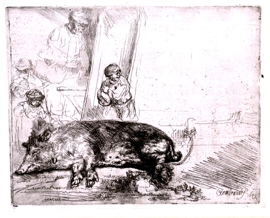 Animal - Range and Farm - Pig, Rembrandt