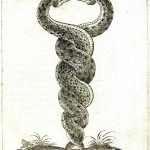 Animal - Reptile - Intertwined snakes