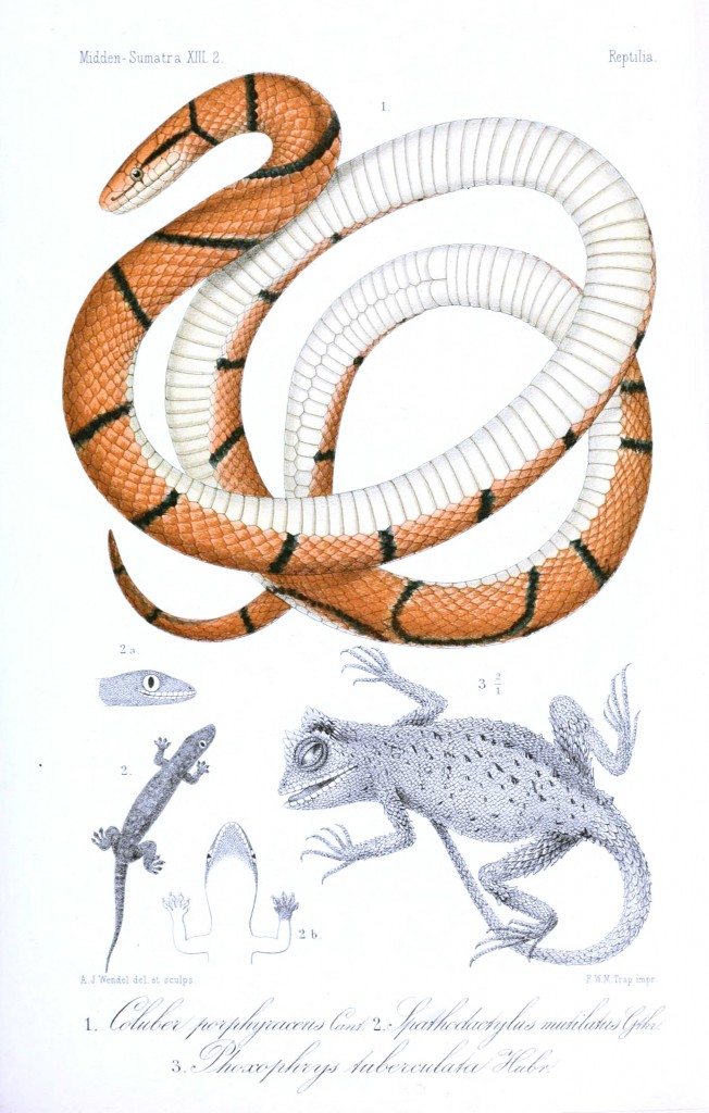 Animal - Reptile - Snake and lizard