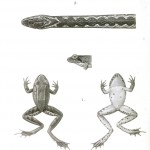 Animal - Reptile - Snakes and frogs