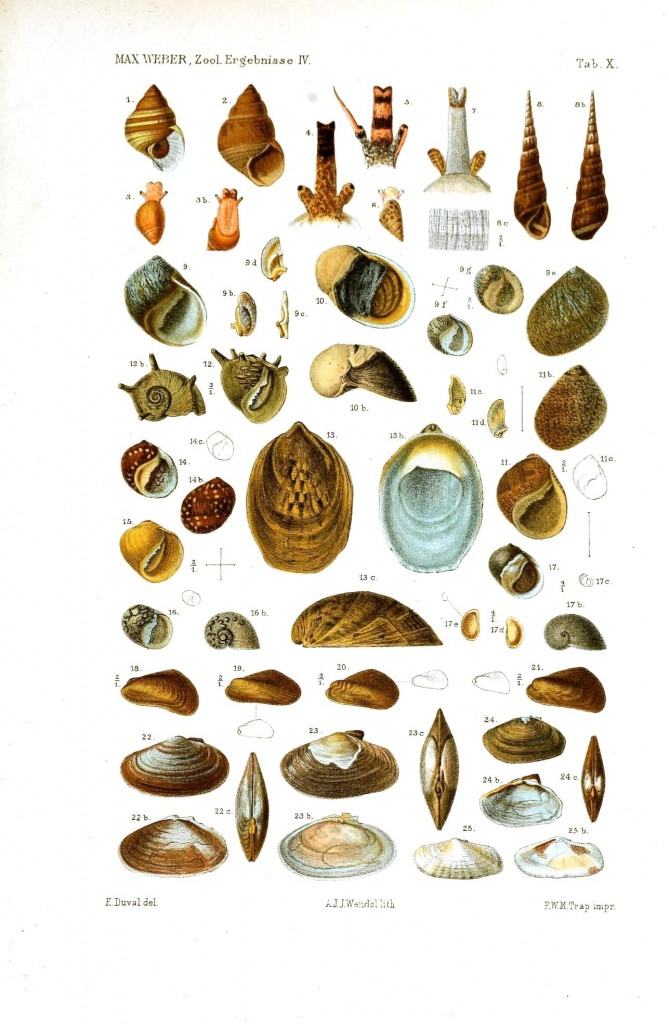 Animal - Sea Shell - Educational plate