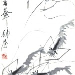 Animal - Sea shell - Shrimps, Chinese brush drawing