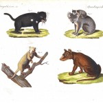 Animal - Wild - Educational plate, Australian quadrupeds