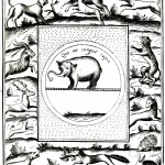 Animal - Wild - Elephant - Emblem with other animals