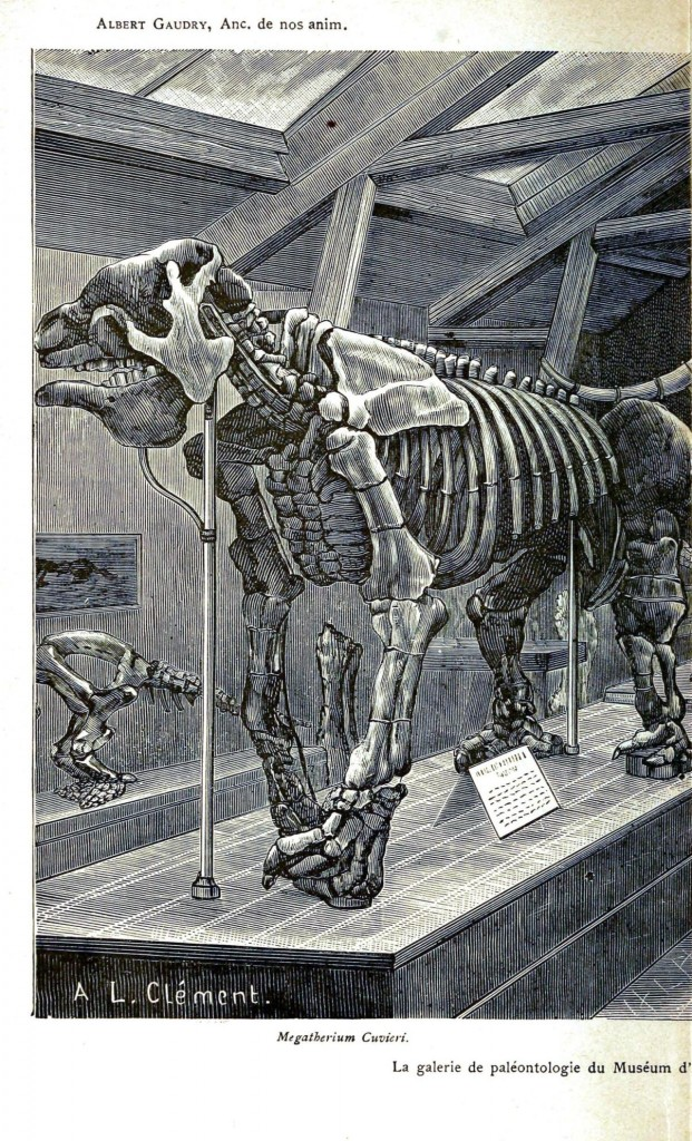 Animal - Wild - Elephant - Mastadon skeleton 2