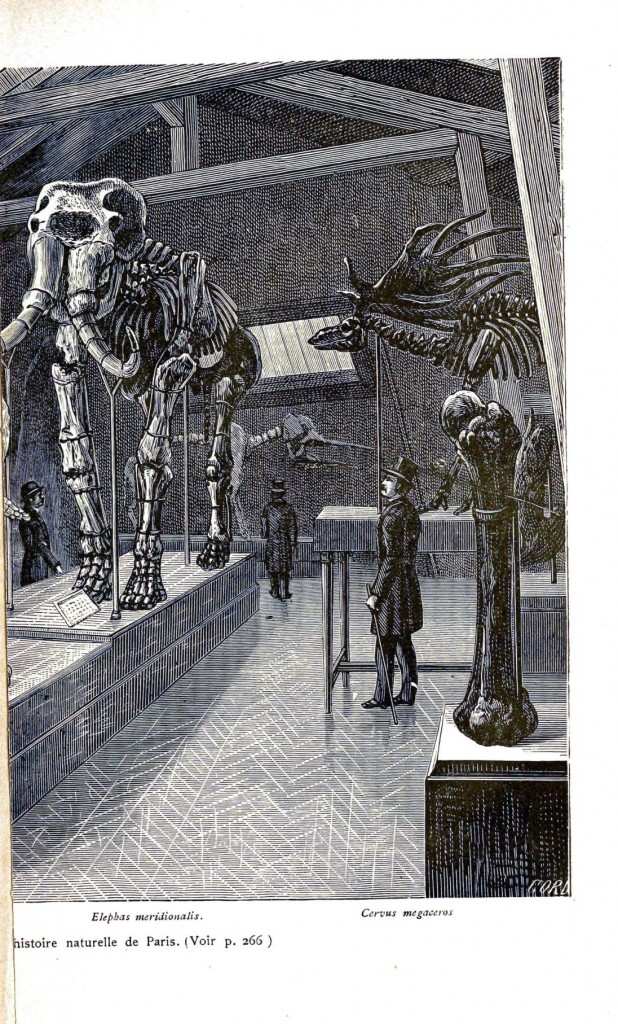 Animal - Wild - Elephant - Mastadon skeleton