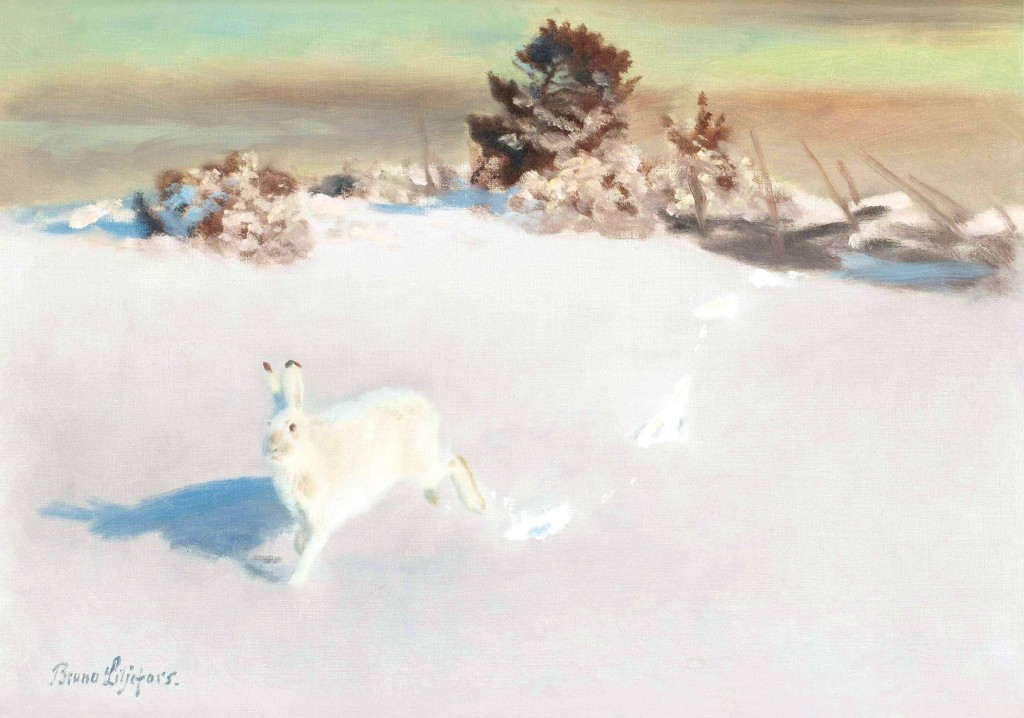 Animal - Woodland - Arctic hare, white rabbit painting
