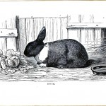Animal - Woodland - Rabbit - Dutch
