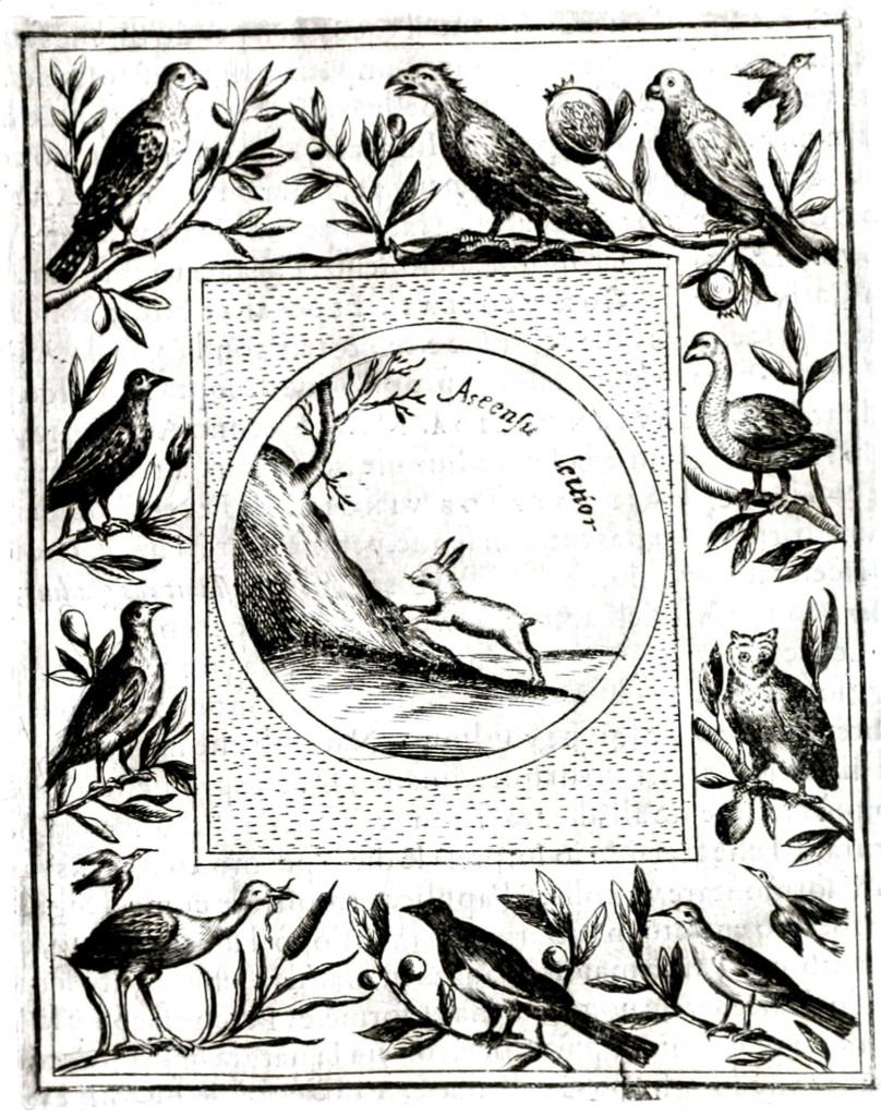 Animal - Woodland - Rabbit - Emblem with other animals