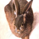 Animal - Woodland - Rabbit, brown