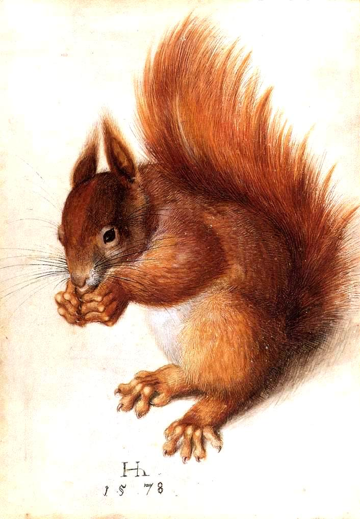 Animal - Woodland - Squirrel, red