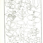 Botanical - Black and white - British Liverwarts 01 (1)