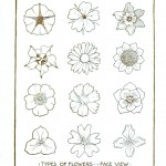 Botanical - Flower - Flower line drawings 2