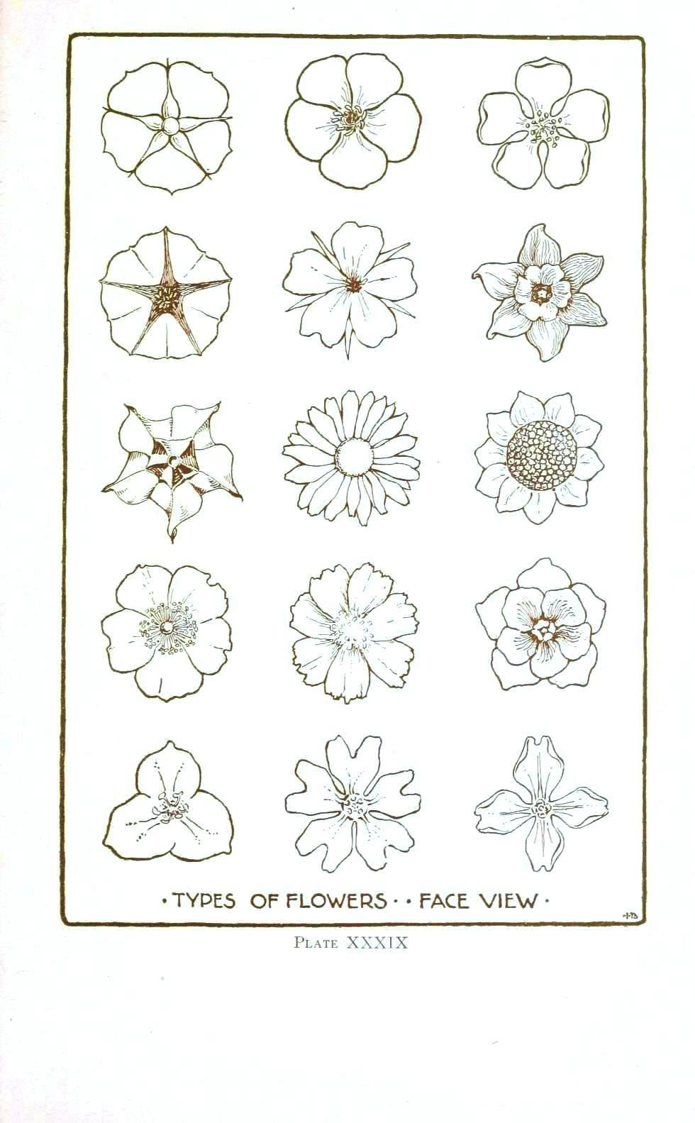 Line Drawing Flowers Blossom : Botanical flower line drawings vintage