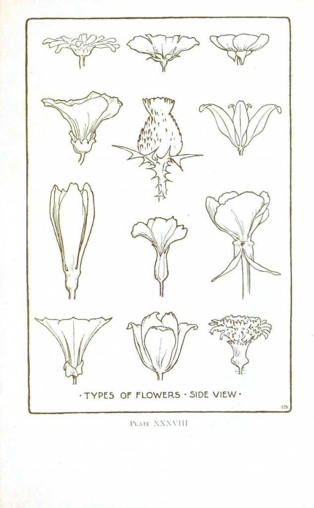 Botanical - Flower - Flower line drawings