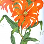 Botanical - Flower - Orange flowers