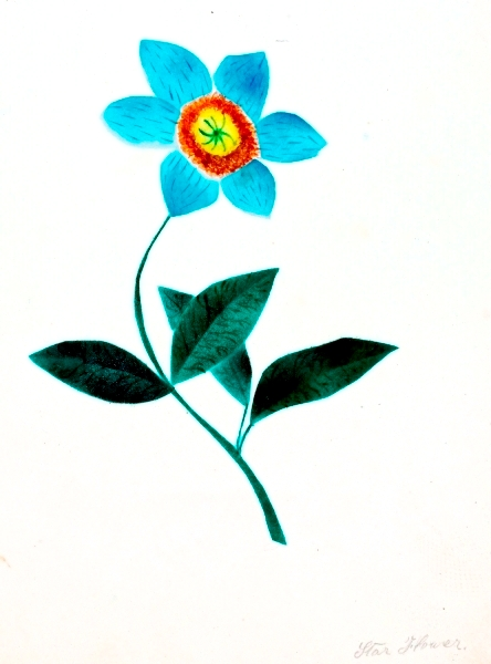 Botanical - Flower - Starflower